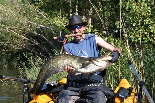 rotauge.at Berichte Fliegenfischen auf Waller am Ebro